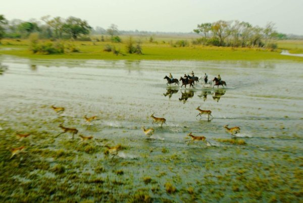 Antelope and horses galloping in the water