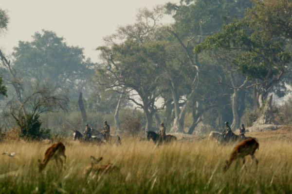 Antelope grazing in long grass with horseback riders and tall trees