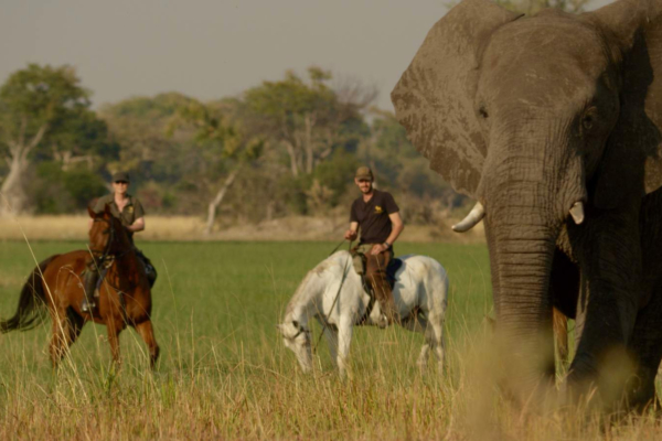 Two horseback riders with African Elephant