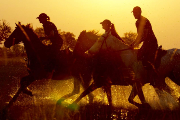 Horseriders galloping in water at sunset