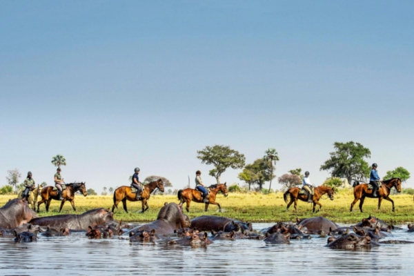 horse riding with hippos