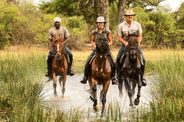 Horses cantering in water
