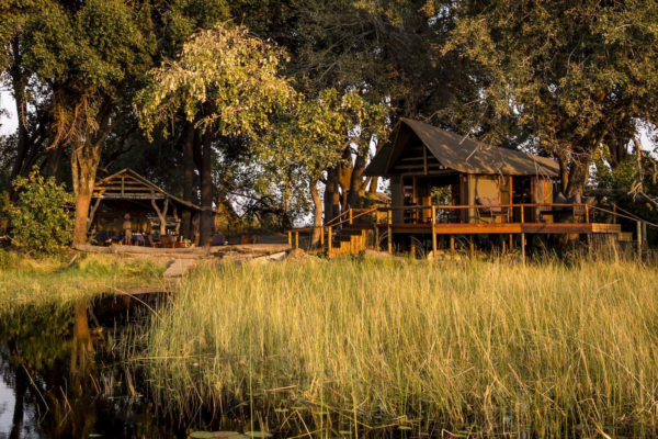Safari tents on stilts with water and reeds