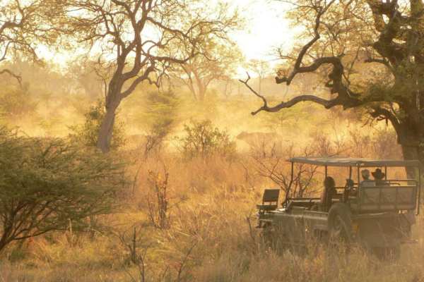 Game drive at dusty sunset