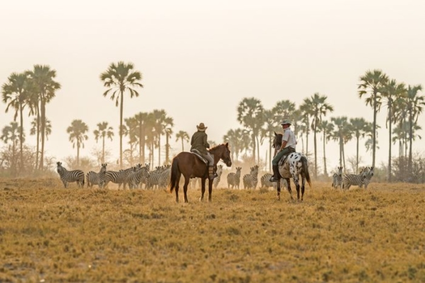 Horseback riders and zebra herd with palm trees