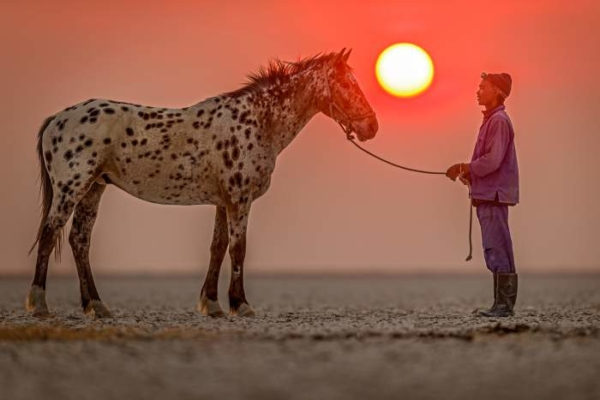 Appaloosa horse and man with red sunset