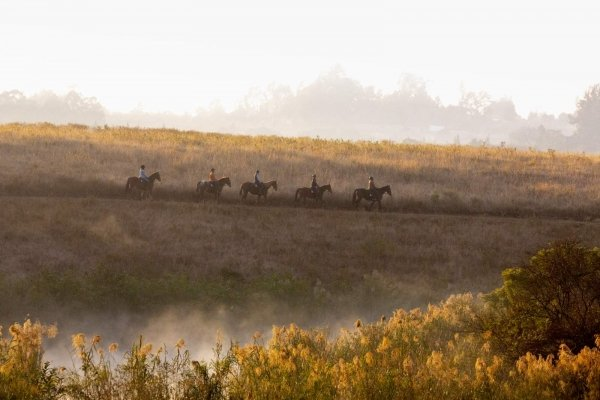 Horse riders on a ridge in the mist