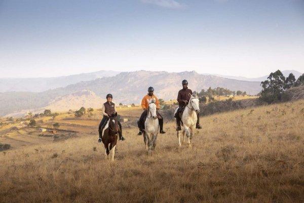 Three horses ridden side by side in Eswatini