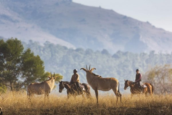Horse riding with African antelope