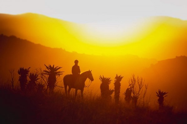 Horse riding sunset silhouette