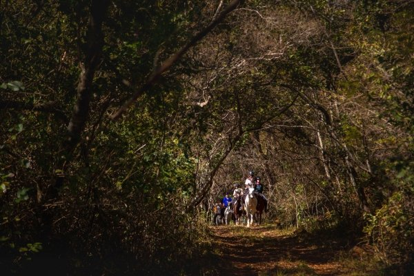 Horse riding through forest tree tunnel
