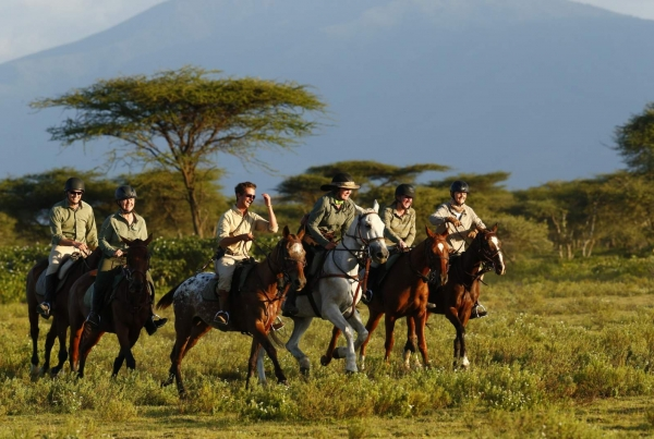 Safari horses cantering in Serengeti