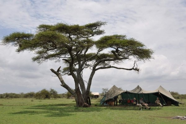 Canvas tent under Acacia Tree in Tanzania