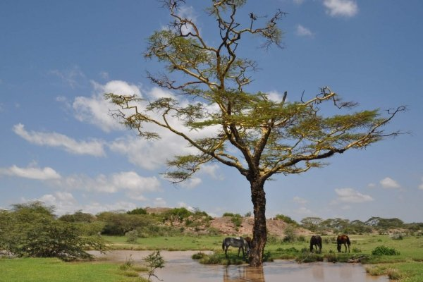Horses under big tree with lake
