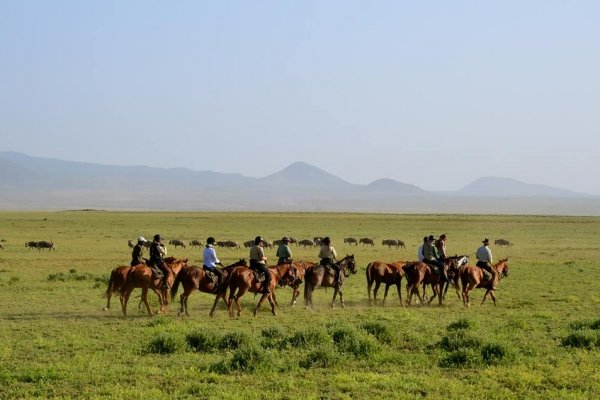 Horse safari with wildebeest in Serengeti