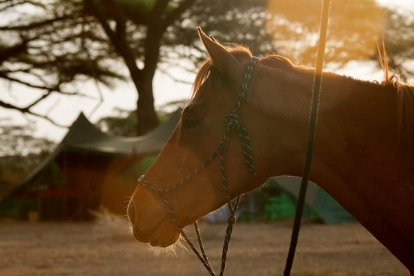 Horse in front of tents in Tanzania