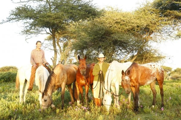 Horses and riders under Acacia Trees