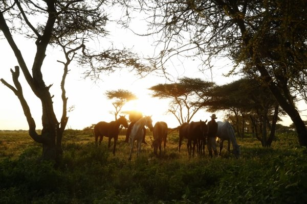 Horses under Acacia trees in the Serengeti