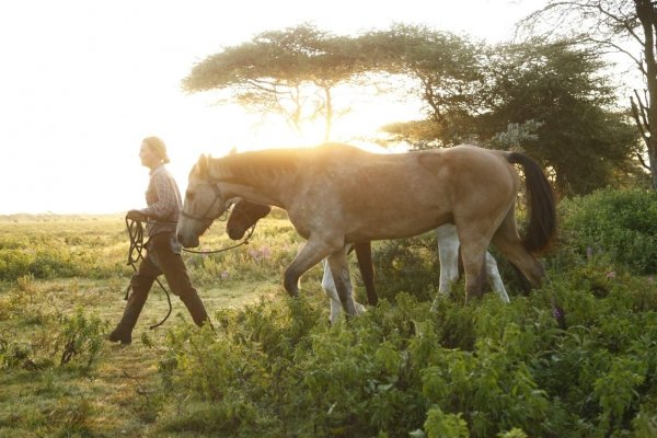 Horses walking in African dawn