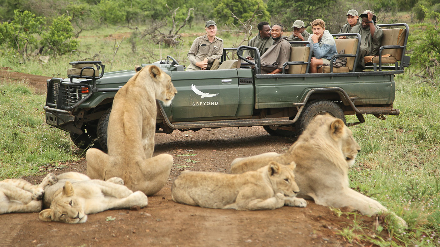 Lions and safari vehicle