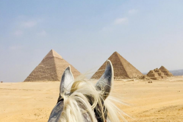 Pyramids of Giza through horses ears