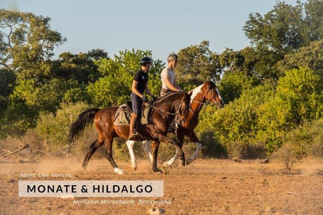 two horses cantering