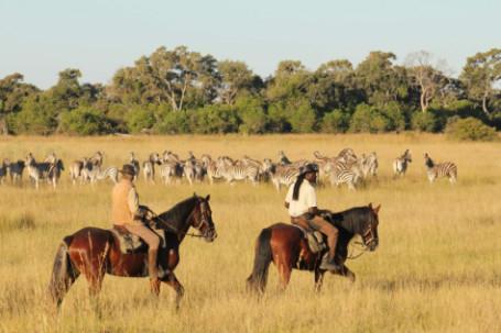 Horses and zebra