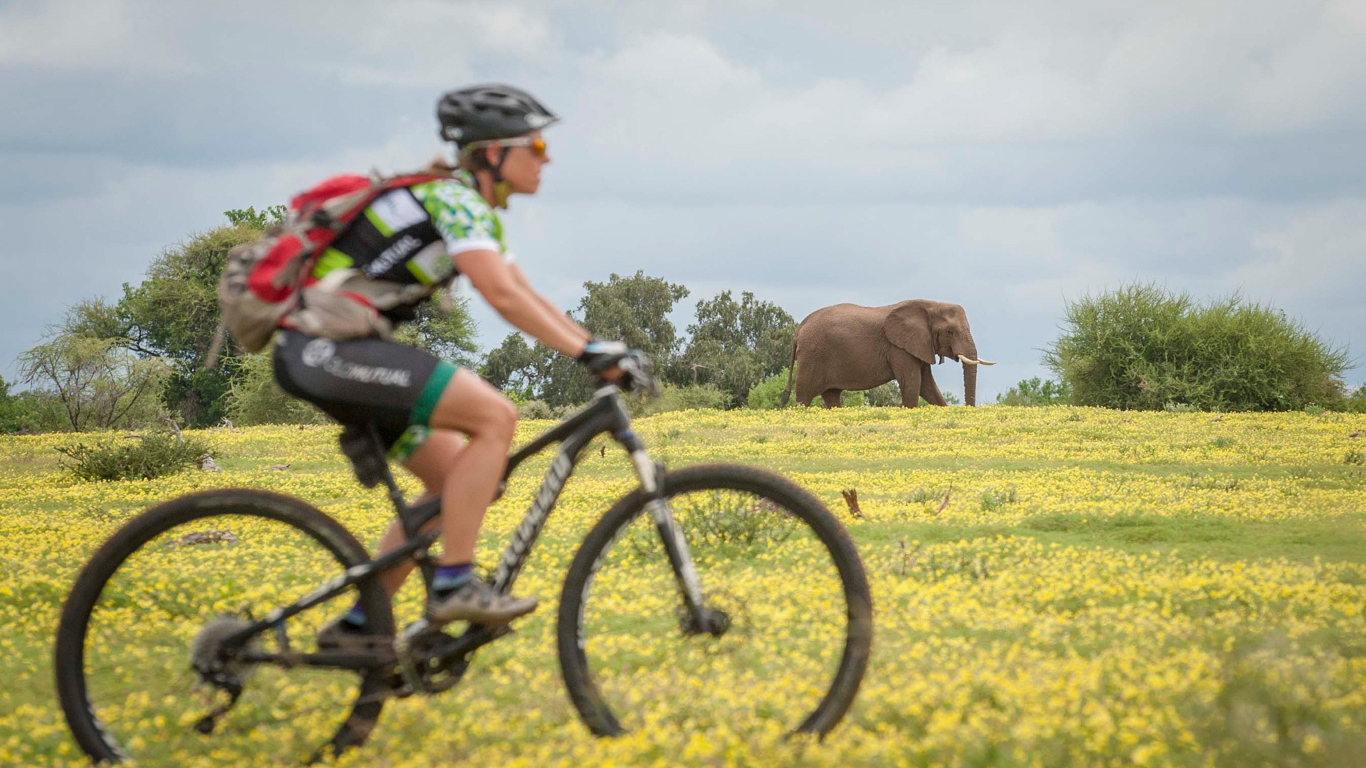 Cycling with elephants in Mashatu
