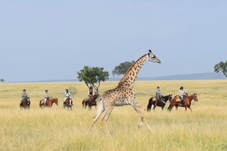horse riding with running giraffe