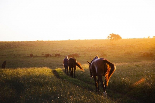 horses walking to pasture at sunset