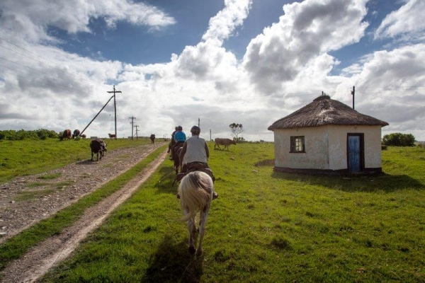 Horse riding along road with cows and thatched hut