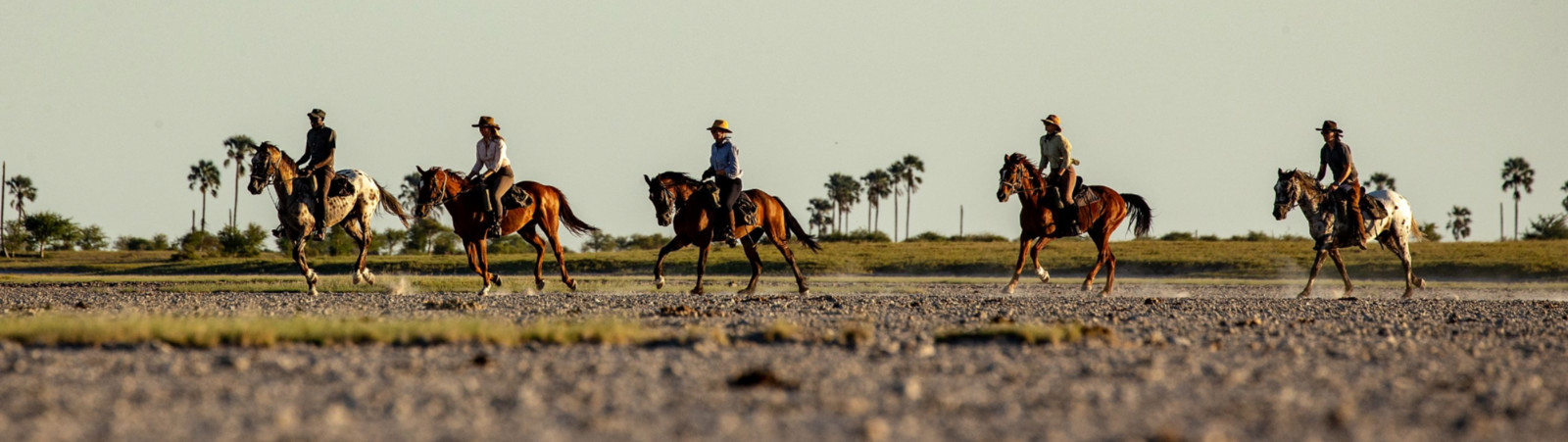 Why is a Horse Safari the Next Big Thing?