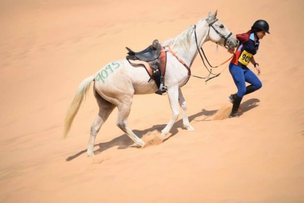 Endurance horse riding in Namibia