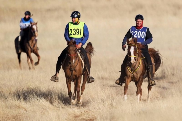 Group of endurance horse riders