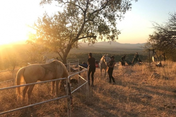 Horses in fenced paddock at sunset