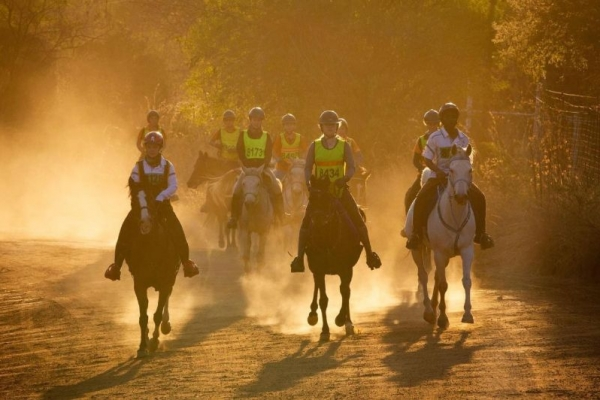 Take part in local endurance rides