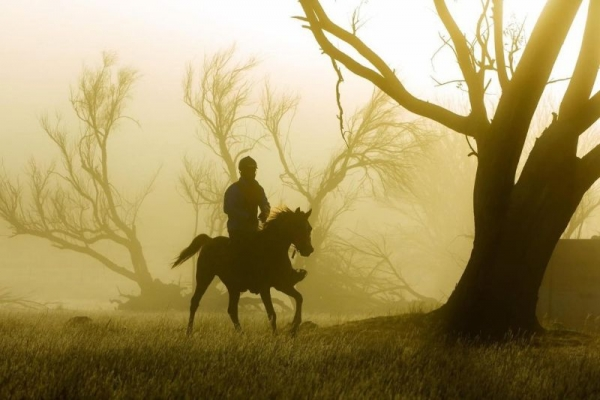 Horse riding in the misty forest