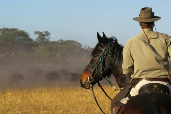 Horse riding with buffalo herds