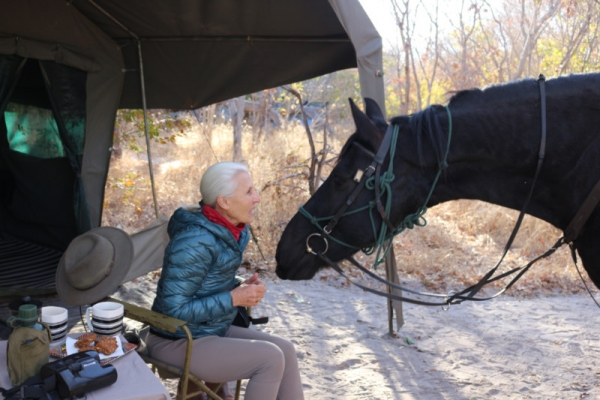 old woman kissing black horse