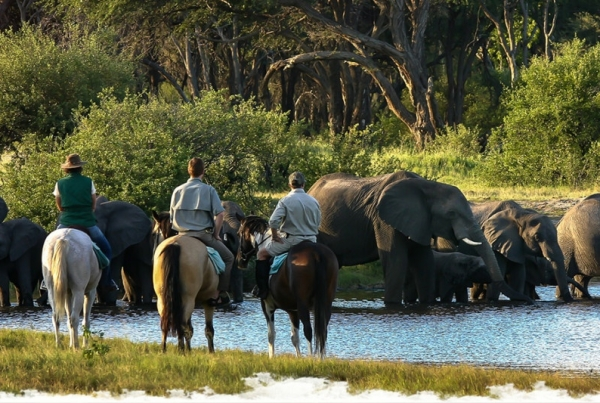 Horse riding with elephant in Zimbabwe