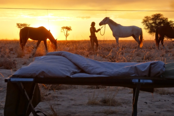 Camping bed with horses in the background