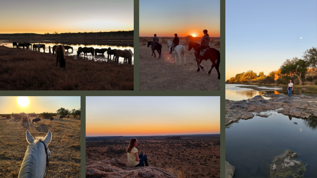 Collage of horse riding