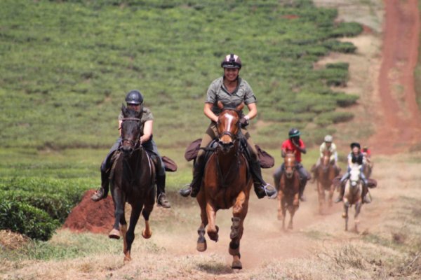 Horses galloping on red sand
