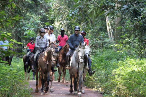 group of horses riding in forest