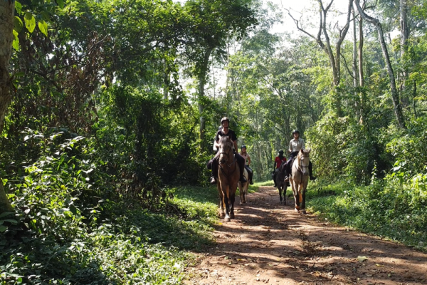Horse riding through Mabira forest